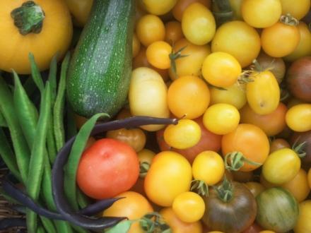 16th sept harvest