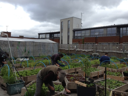 May harvest by grower,apprentices and volunteers
